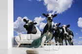 Fotobehang vinyl - Vier Friese koeien onder een bewolkte hemel breedte 390 cm x hoogte 260 cm - Foto print op behang (in 7 formaten beschikbaar)