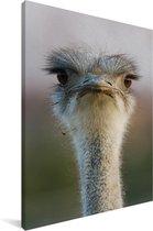 Close-up van een emoe Canvas 120x180 cm - Foto print op Canvas schilderij (Wanddecoratie woonkamer / slaapkamer) XXL / Groot formaat!