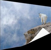 Berggeit bij een klif  Poster 90x60 cm - Foto print op Poster (wanddecoratie woonkamer / slaapkamer) / Dieren Poster