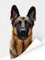 Duitse Herdershond met witte achtergrond Poster 30x40 cm - klein - Foto print op Poster (wanddecoratie woonkamer / slaapkamer) / Huisdieren Poster
