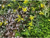 Lichtgewicht groen dak (per m2)