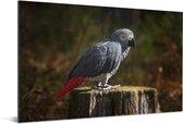 Schitterende grijze roodstaart op afgezaagde boomstam Aluminium 30x20 cm - klein - Foto print op Aluminium (metaal wanddecoratie)