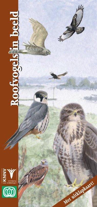 In Beeld 19 - Roofvogels in beeld