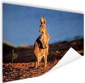 Kangoeroe zonsondergang Poster 120x80 cm - Foto print op Poster (wanddecoratie)