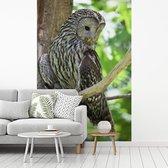 Fotobehang vinyl - Oeraluil kijkt omlaag vanuit een boom breedte 215 cm x hoogte 320 cm - Foto print op behang (in 7 formaten beschikbaar)