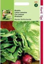 Bindsla Blanke Zelfsluitende - Lactuca sativa - set van 9 stuks