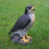 roofvogel Havik - 26 cm
