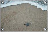 Tuinposter –Baby Schildpad op het Strand– 120x80 Foto op Tuinposter (wanddecoratie voor buiten en binnen)