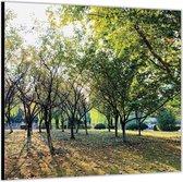 Dibond –Bomen– 50x50 Foto op Aluminium (Wanddecoratie van metaal)