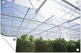 Planten groeien in kas tuinposter 120x80 cm - Tuindoek / Buitencanvas / Schilderijen voor buiten (tuin decoratie)