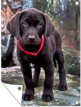 Portret van een bruine puppy Tuinposter 60x80 cm - Tuindoek / Buitencanvas / Schilderijen voor buiten (tuin decoratie)