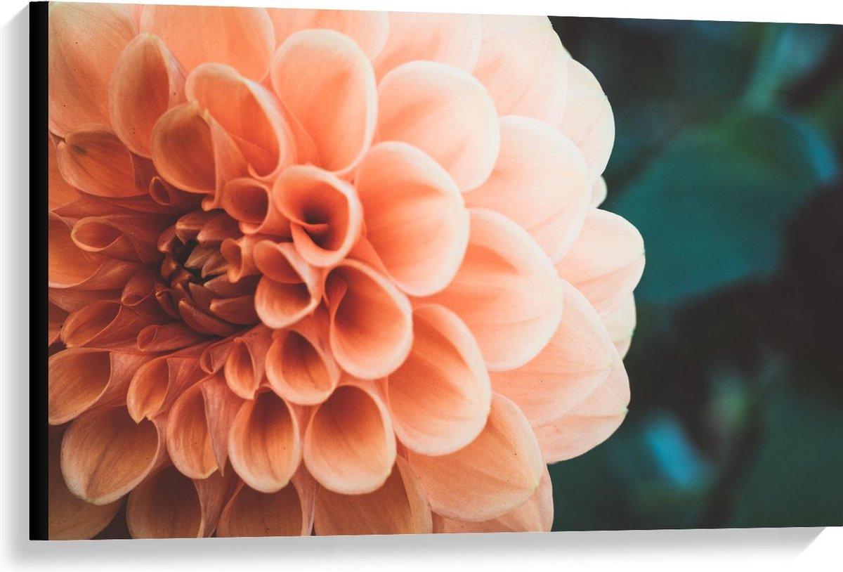 Canvas  - Roze Open Bloem - 90x60cm Foto op Canvas Schilderij (Wanddecoratie op Canvas)