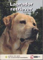 Over Dieren  -   Labrador retriever