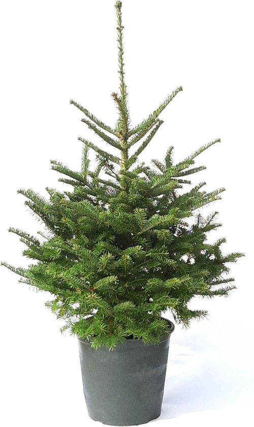 Plant&More - Nordmann Kerstboom 240 Met verlichting