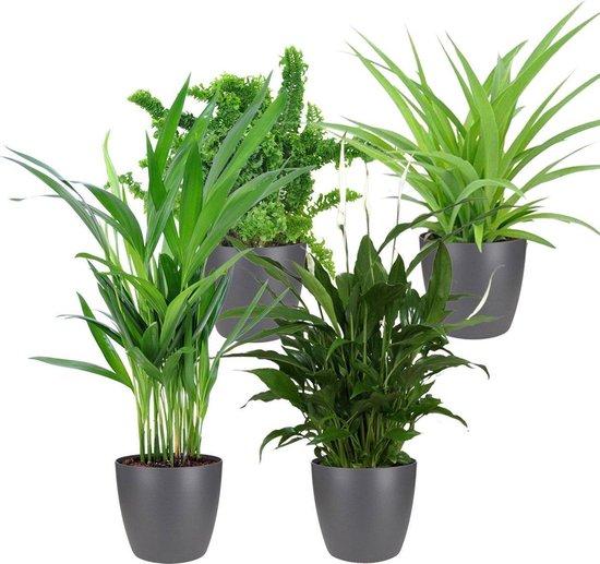 Mix van 4 luchtzuiverende kamerplanten | Areca - Emina - Spathiphyllum - Chlorophytum | Incl. ELHO sierpot antraciet - ↑ 25-30cm - Ø 12cm