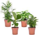 Plant in a Box - Budget mix van 4 luchtzuiverende kamerplanten - Pot ⌀12cm - Hoogte ↕ 25-40cm - Groen