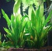 Hiden | Kunstmatige Aquarium plant - Aquascaping - Vissen - Plantdecoratie | Groen