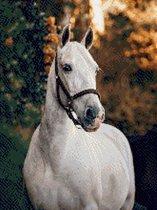 MyHobby Borduurpakket – Paard 30×40 cm - Aida stof 5,5 kruisjes/cm (14 count)