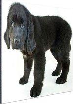 Schattige zwarte puppy Aluminium 120x80 cm - Foto print op Aluminium (metaal wanddecoratie)