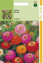 Hortitops Zaden - Zinnia Liliput/Pompon dubbelbl. gemengd