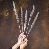 Pampas - 15 stuks – Pampas gras – 70 cm