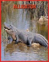Alligator: Erstaunliche Fakten & Bilder