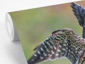 Fotobehang vinyl - Smelleken strijkt neer op een tak breedte 420 cm x hoogte 280 cm - Foto print op behang (in 7 formaten beschikbaar)