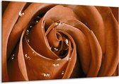 Glasschilderij Roos | Bruin, Wit | 120x70cm 1Luik | Foto print op Glas |  F000716