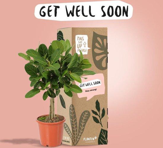 Get well soon Plantenbox