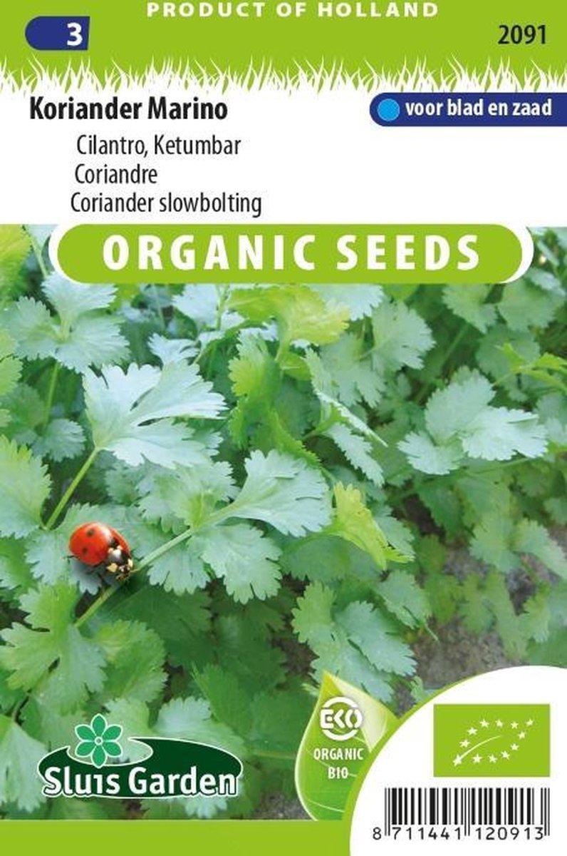 Sluis Garden - Koriander Marino Biologisch (Coriandrum sativum)