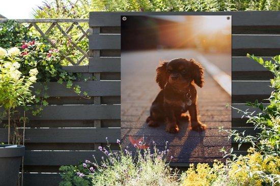 Zonnestralen over de Cavalier King Charles-spaniël puppy Tuinposter 120x160 cm - Tuindoek / Buitencanvas / Schilderijen voor buiten (tuin decoratie) XXL / Groot formaat!