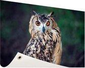 Oehoe uil Tuinposter 60x40 cm - Foto op Tuinposter / Schilderijen voor buiten (tuin decoratie)