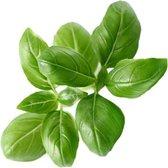 Click And Grow navulling - Basilicum