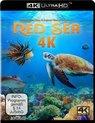 Red Sea (4K UHD) (Blu-Ray)