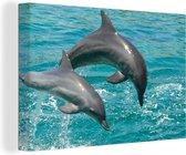 Tuimelaars Canvas 90x60 cm - Foto print op Canvas schilderij (Wanddecoratie woonkamer / slaapkamer) / Wilde dieren Canvas Schilderijen