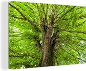 Een kastanjeboom tijdens de zomer Canvas 30x20 cm - klein - Foto print op Canvas schilderij (Wanddecoratie woonkamer / slaapkamer) / Bomen Canvas Schilderijen