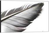 Dibond –Grijze Veer Close Up-60x40 Foto op Aluminium (Wanddecoratie van metaal)