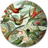 Ronde muursticker Kolibries | Meesterwerk van Ernst Haeckel | 60 cm behangsticker wandcirkel | Oude Meesters kunstwerken | Herpositioneerbare wandsticker muurcirkel kunstwerk