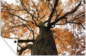 Amerikaanse kastanjeboom tijdens de herfst Tuinposter 180x120 cm - Tuindoek / Buitencanvas / Schilderijen voor buiten (tuin decoratie) XXL / Groot formaat!
