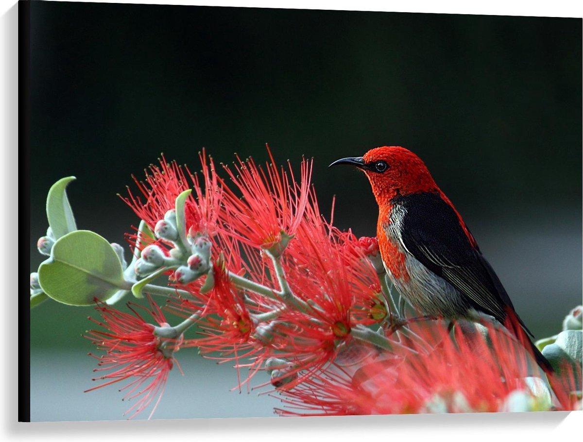 Canvas  - Zwart met Rood Vogeltje bij Plantje - 100x75cm Foto op Canvas Schilderij (Wanddecoratie op Canvas)