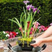 3x Vijverplanten Mix Incl. drijfring - ↑ 30-40cm - Ø 24cm