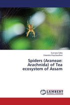 Spiders (Araneae