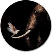 Wandcirkel Olifant met duif - WallCatcher   Aluminium 40 cm   Muurcirkel Elephant with Pigeon