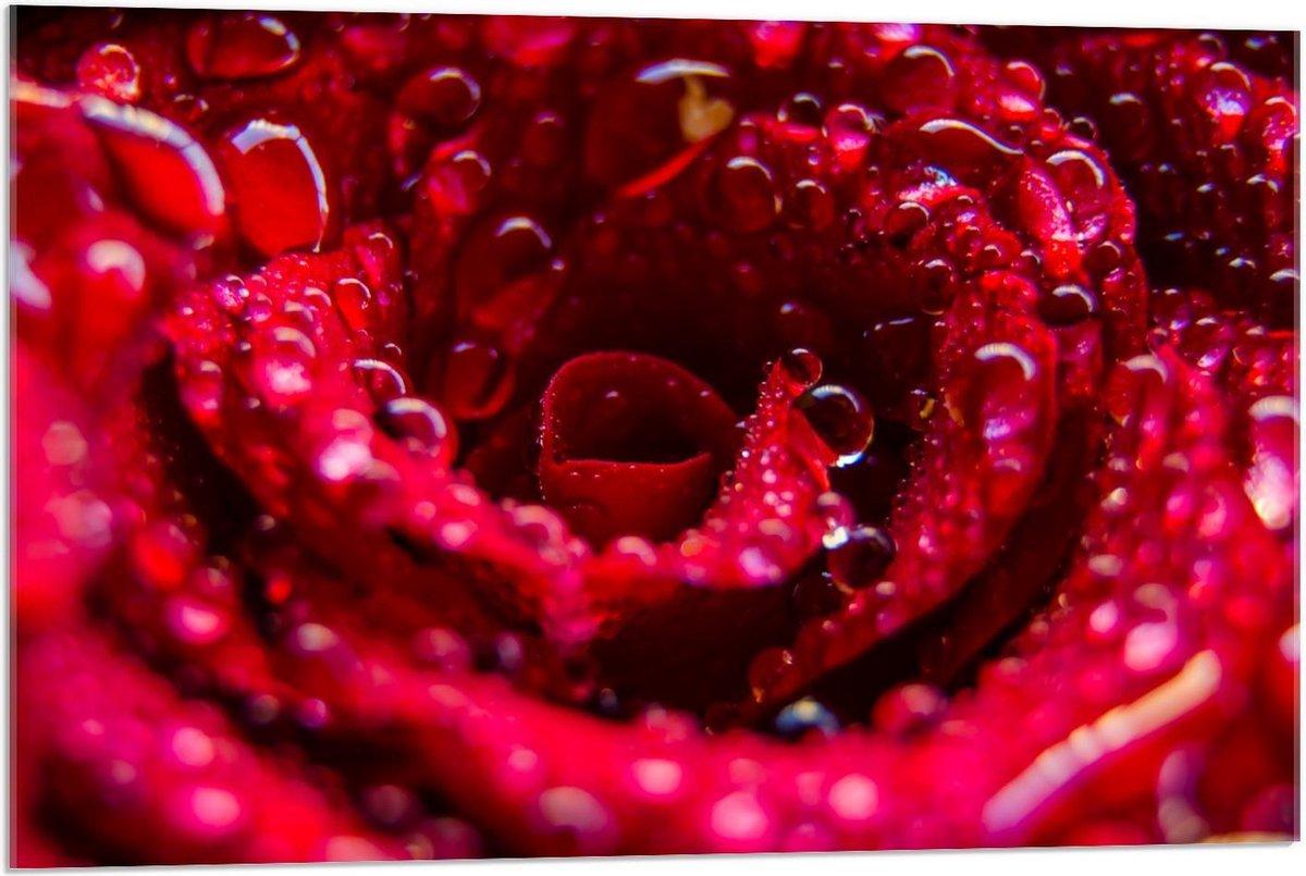 Plexiglas - Binnenkant van Rode Roos met Waterdruppels  - 90x60cm Foto op Plexiglas (Met Ophangsysteem)