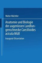 Anatomie Und Biologie Der Augenlosen Landlungenschnecke Caecilioides Acicula Mull