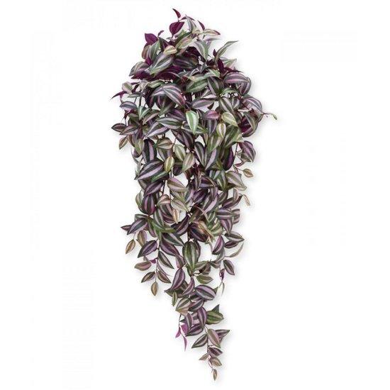 Tradescantia Zebrina Hangplant. 12cm Leuk voor huiskamer of kantoor