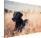 Een Labrador Retriever ligt in het hoge gras Canvas 180x120 cm - Foto print op Canvas schilderij (Wanddecoratie woonkamer / slaapkamer) / Huisdieren Canvas Schilderijen XXL / Groot formaat!
