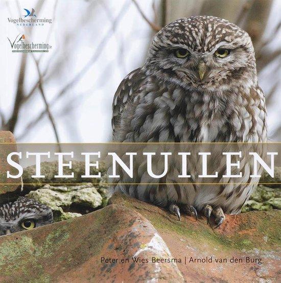 Steenuilen - P. Beersma |
