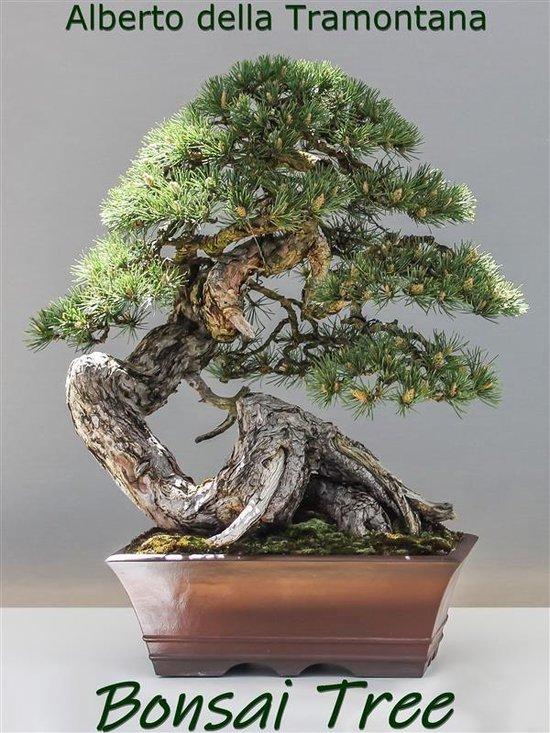 Bol Com Bonsai Tree Ebook Alberto Della Tramontana 9788835876250 Boeken