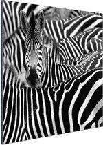 Zebra zwart-wit  Aluminium 120x80 cm - Foto print op Aluminium (metaal wanddecoratie)